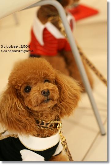 2008-10-Loved Friends-Daisy-0