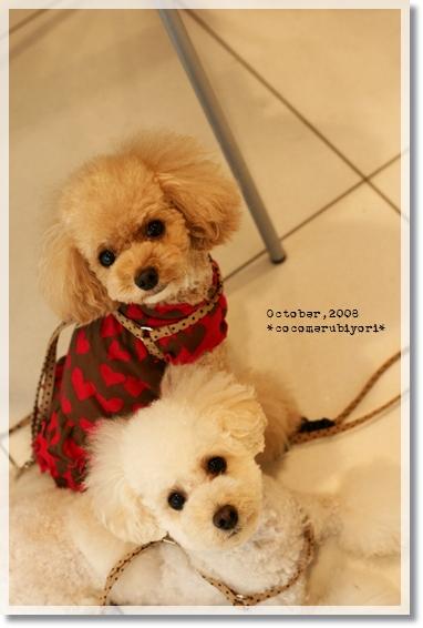 2008-10-Loved Friends-ココメル