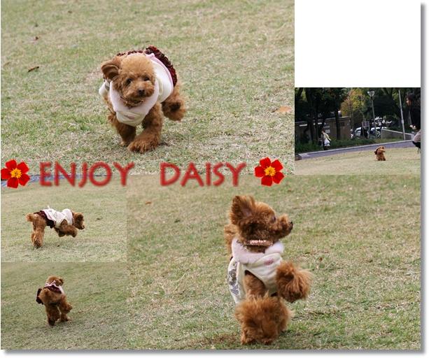 Park Utubo-DAISY