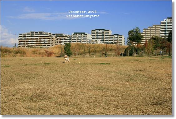 New Lens-公園