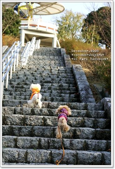 12月の蜻蛉池-階段ココメル