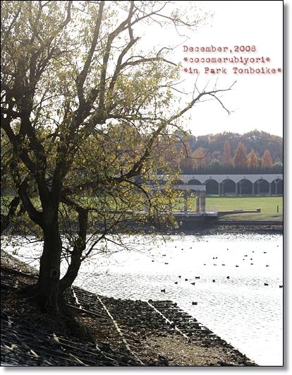 12月の蜻蛉池-