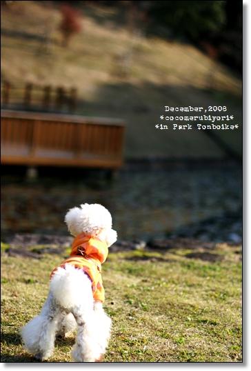 12月の蜻蛉池-水辺バックショットメル