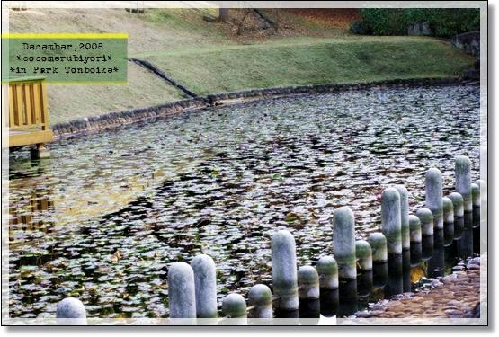 12月の蜻蛉池-水辺
