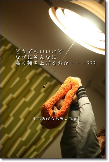 2008-12-31-ココナ-