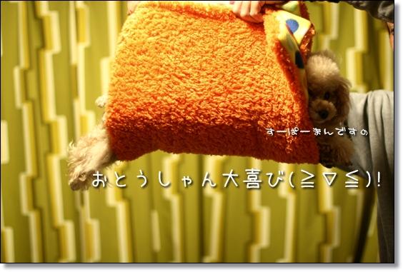 2008-12-31-ココナ--
