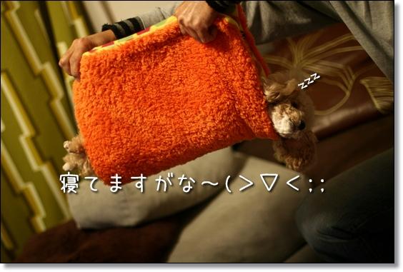 2008-12-31-ココナ---