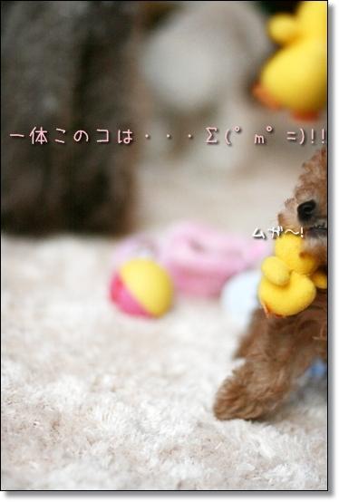 2009-01-14-あくび