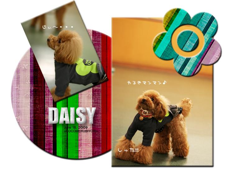 デイジー1