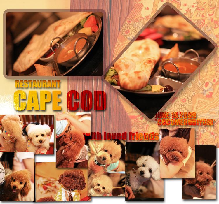 cape-cod-002.jpg