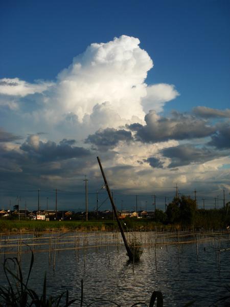 とある日の雲