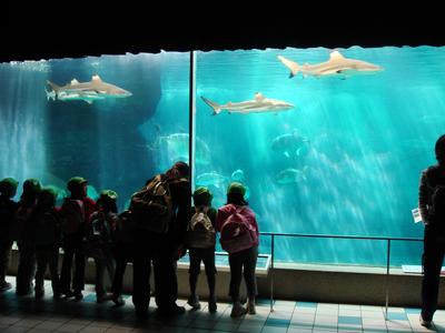 須磨の水族園