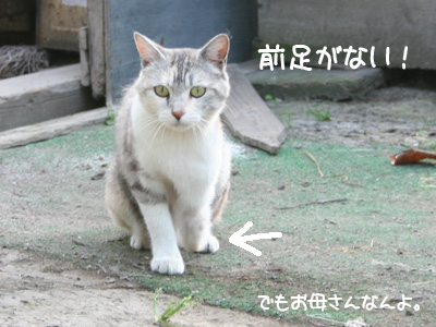 IMG_1231.jpg