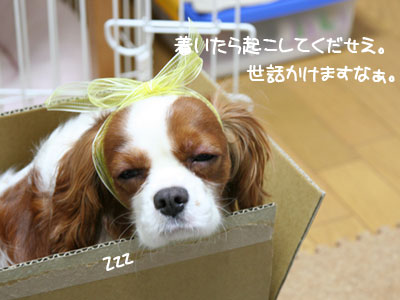 IMG_3265.jpg