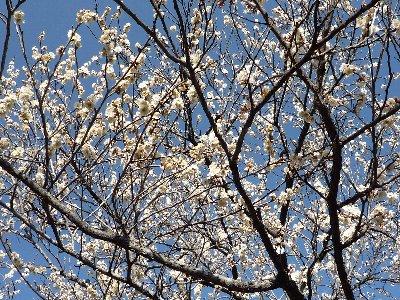 もう、春ですね~♪