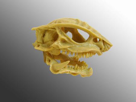 skull open
