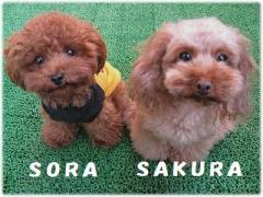 sora&sakura2
