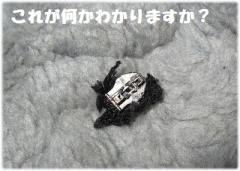 IMG_1700[1]