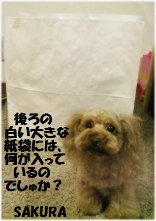 IMG_2245[1]