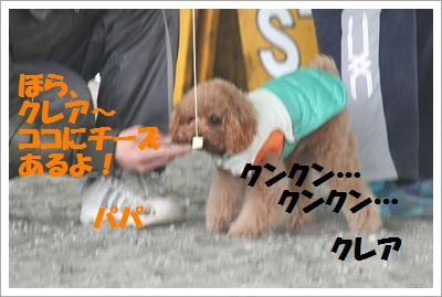 IMG_8014[1]