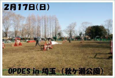 IMG_8408[1]