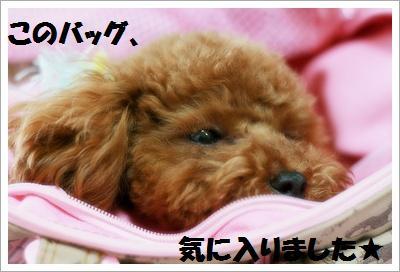IMG_8929[1]