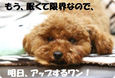 IMG_1306[1]