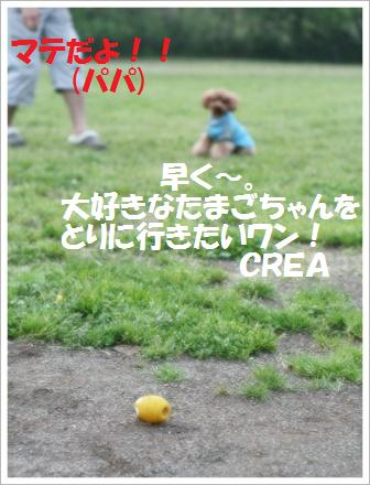 IMG_1516[1]