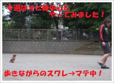 IMG_4032[1]