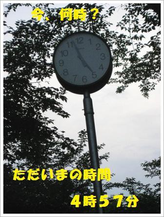 IMG_4041[1]