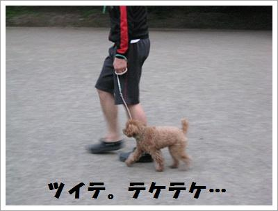 IMG_4028[1]