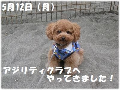 IMG_4225[1]