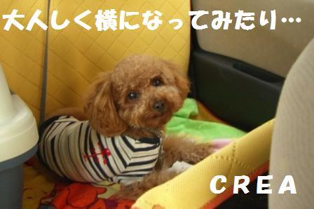 CIMG061116.jpg