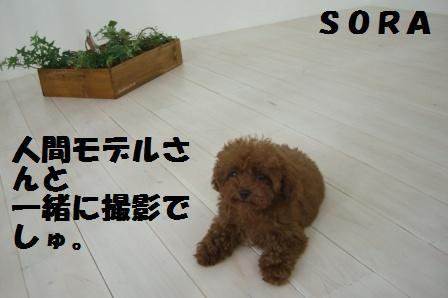 CIMG07071117.jpg
