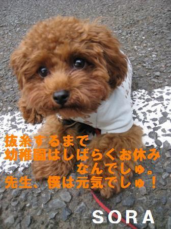 IMG_00113.jpg
