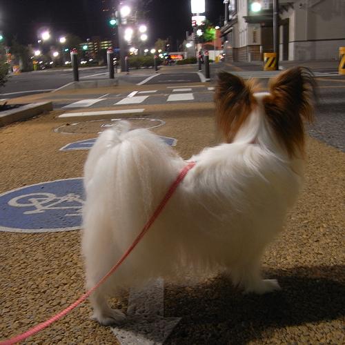 深夜のお散歩・・・誰もいない・・・