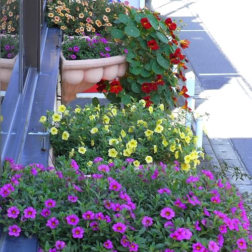 2009年夏の花はリリカシャワー