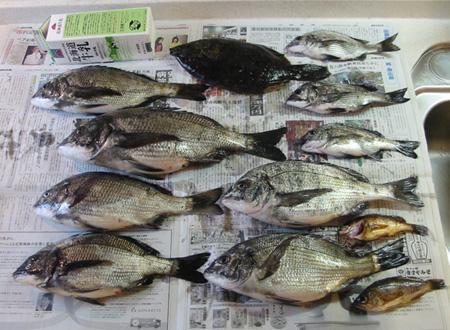 fish423a.jpg