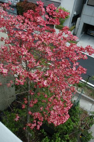 hanamizuki418-5.jpg