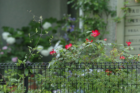 kakuteru2008506-2a.jpg
