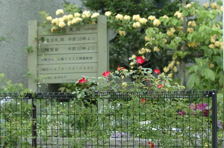 kakuteru2008506-4a.jpg