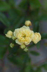 kimokkou415-2a.jpg