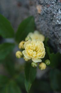 kimokkou415-4a.jpg