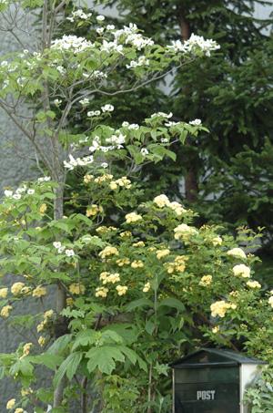 kimokkou429-3.jpg