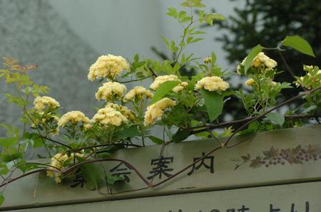 kimokkou429-7.jpg