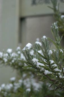 lavender224.jpg