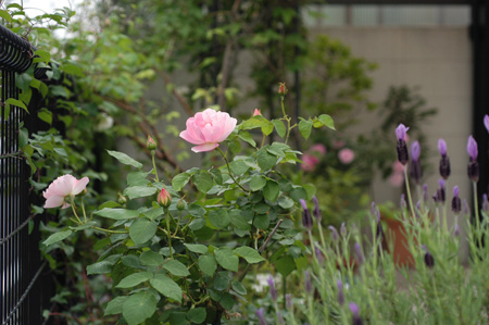 peachb2008508-9.jpg