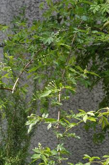 shiromokkou421-1.jpg