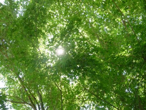 新緑の眩しさ
