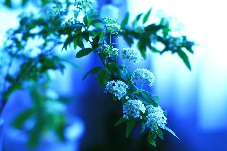 窓辺の白い花23
